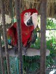 wilde dieren in gevangenschap....4
